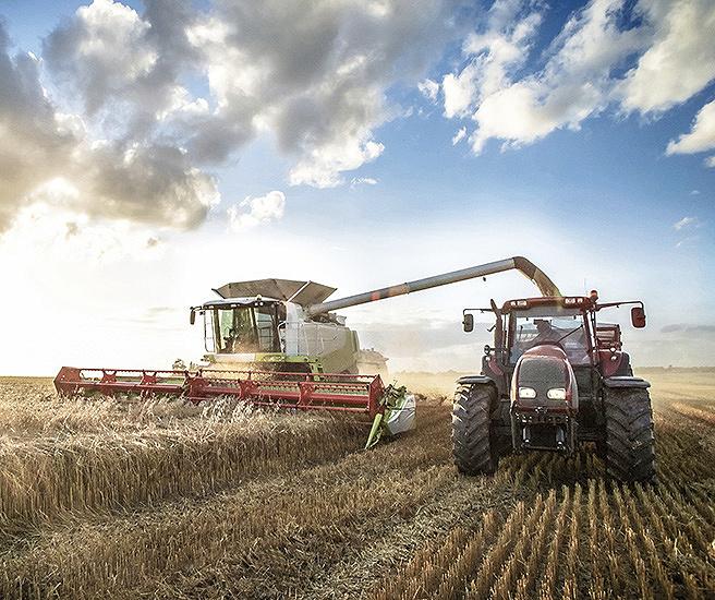 Farmer combining wheat